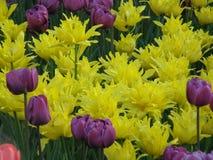 Blumen Flache Schärfentiefe Stockfoto