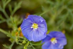 Blumen-Flachsjahre lizenzfreies stockbild