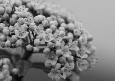 Blumen in Florenz stockfotografie