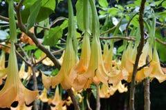 Blumen in Florenz Lizenzfreie Stockfotografie