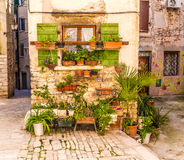 Blumen in Front Of Old Building-Rovinj, Kroatien Lizenzfreie Stockfotos