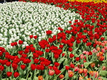 Blumen-Garten Lizenzfreies Stockfoto