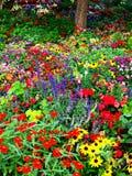 Blumen-Garten Stockfotos