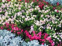 Blumen-Garten Stockfotografie