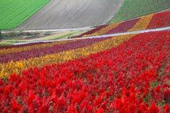 Blumen-Garten in Hokkaido, Japan Stockfotos