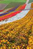 Blumen-Garten in Hokkaido, Japan Stockbild
