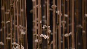 Blumen gebunden auf Seilen stock video
