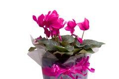 Blumen gegen einen weißen Hintergrund Lizenzfreies Stockfoto