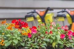 Blumen gegen städtischen abgegratenen Hintergrund mit Fahrrädern Stockfotografie