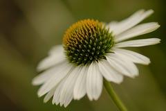 Blumen gehen immer (1) stock photo