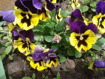 Blumen gelb Sommer purpurrot nave stockbilder