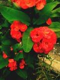 Blumen gepflanzt Lizenzfreies Stockbild