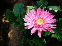 Blumen gepflanzt in einem Topf lizenzfreie stockfotos