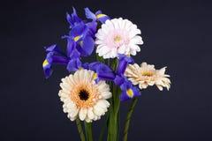 Blumen Gerbera und Blende Stockfoto