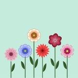 Blumen-gesetzter Hintergrund Lizenzfreie Stockbilder