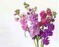 Blumen getrennt auf einem weißen Hintergrund Stockfotos