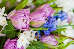 Blumen getrennt auf weißem Hintergrund stockfotografie