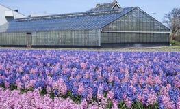 Blumen-Gewächshaus Stockfotos