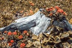 Blumen gewachsen im Hanf Waldschönheit stockbild