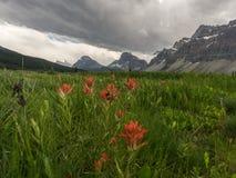 Blumen Blumen Glacier Gletscher Mountain Berge lizenzfreies stockfoto