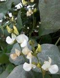 Blumen Grün-blauer Tagesschöner guter Schuss Stockfotografie