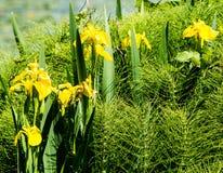 Blumen am grünen See Stockfotos