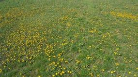 Blumen, Gras, Leben, ruhiger Moment in der Zeit Stockbild