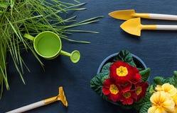 Blumen, Gras, Sachen kümmern sich um ihnen Lizenzfreie Stockfotografie