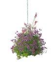 Blumen-hängender Korb Lizenzfreie Stockbilder