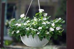 Blumen-hängender Korb Lizenzfreies Stockfoto