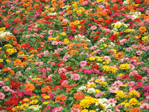 Blumen - Herbstfarben stockbilder