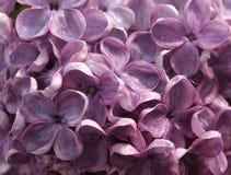 Blumen-Hintergrund Lizenzfreie Stockfotos