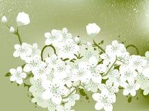 Blumen-Hintergrund Stockfotos