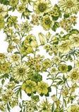 Blumen-Hintergrund Stockbild
