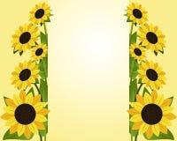 Blumen-Hintergrund mit Grenzen der Sonnenblume mit Platzfor your information Stockbilder