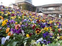 Blumen Hokkaido Stockfoto