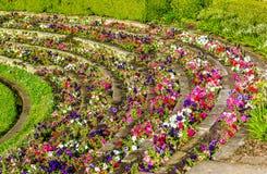 Blumen in Hyde Park von Sydney, der älteste Parkland in Australien Stockbild