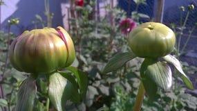 Blumen in ihrer Kindheit Lizenzfreies Stockbild