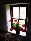 Blumen im alten Tausendstelfenster stockfotos