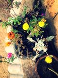 Blumen im Balkon stockbild