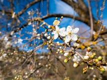 Blumen im Baum stockbild