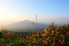 Blumen im Berg Lizenzfreie Stockbilder
