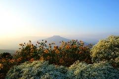 Blumen im Berg Stockfotos