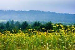 Blumen im Berg Lizenzfreie Stockfotos