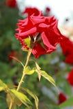 Blumen im Blumenbeet Lizenzfreies Stockbild
