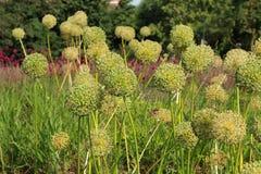 Blumen im Blumenbeet Lizenzfreies Stockfoto