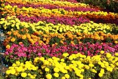 Blumen im Blumenbeet Stockbild
