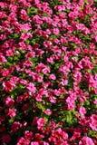 Blumen im Blumenbeet Stockfotos