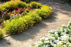 Blumen im Blumenbeet Stockbilder