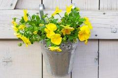 Blumen im Eimer Stockfotografie